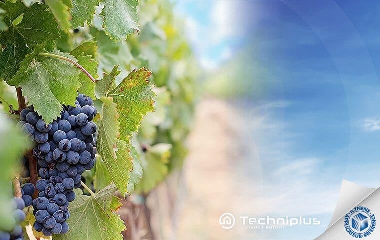 isolation-bâtiment-viticole-vinicole-qualité-vin